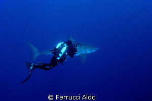 Face to face with Great White Shark in Guadalupe Island by Ferrucci Aldo 
